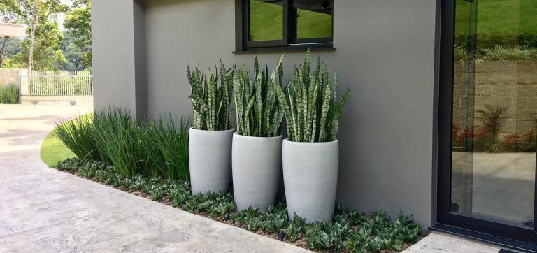 plantas decoração